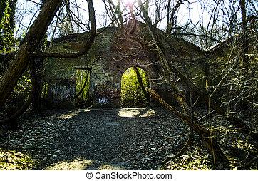 Old forgotten garden
