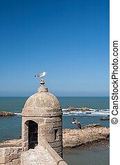 old fortress in Essaouira, Morocco