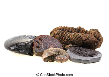 old fossils collection isolated on the white background