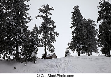 Old frosty wooden hut and snow-covered forest in winter snow...