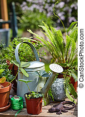 Old galvanised watering can with potted plants, balls of...
