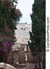 Old garden in Jerusalem