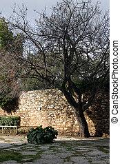 Old garden tree