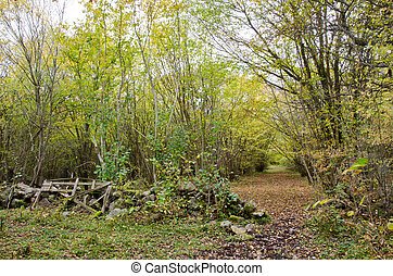 Old gate at a path in autumn