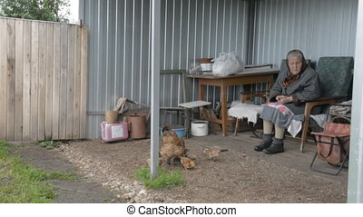 Old grandmother looks after the chicken and chickens. Woman...