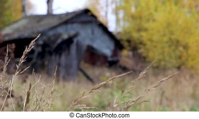 old gray wooden destruction house with overcast and yellow autumn grass and leaves