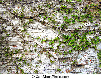 old grunge brick wall with green leaves decoration