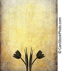 old grunge paper background with image of tulip and space