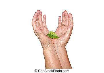 Old hands and young leaf