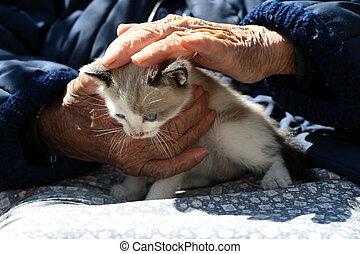 old hands pet a kitten