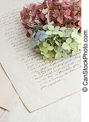 old handwriting and soft hortensia flowers