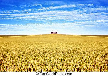 old house in the field of wheat
