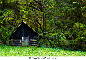 old house in the forest