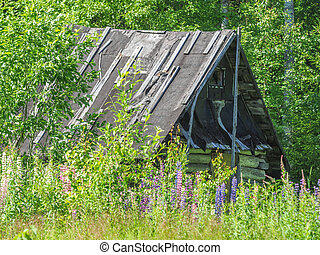 old house in the forest. summer
