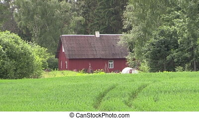 old house near corn field