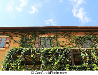 Old house wall with windows covered by leaves