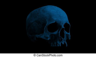 Old Human Skull Rotating In The Dark Loop