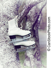 Old ice skates hanging on a tree branch