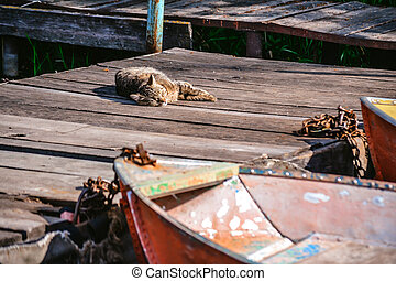 Old iron frayed and shabby boat noses tied to wooden dock and cat