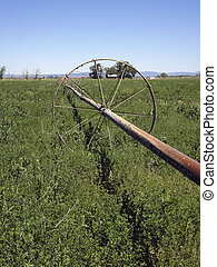 Old Irrigation Line