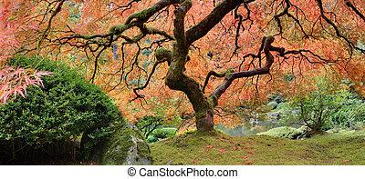 Old Japanese Maple Tree at Public Garden in Autumn Panorama