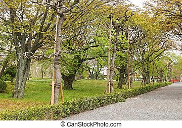 Old Japanese Sato-zakura cherry tree grove being propped up ...
