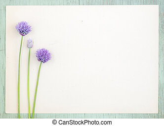 Old kraft paper with purple onion flowers on grunge background.