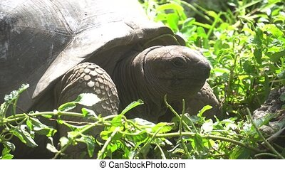 Old, land turtle living on the island 3