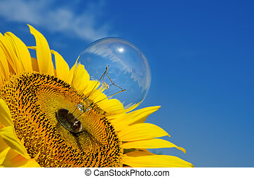 old light bulb and sunflower
