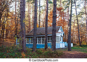 Old lonely wooden house in coniferous forest at sunset