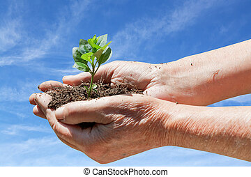 old man hands with handful soil and green sprout