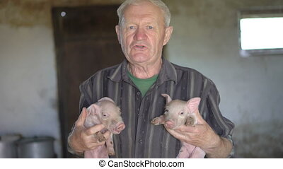 Old man holds two little pigs on the hands, smiling and singing to them.