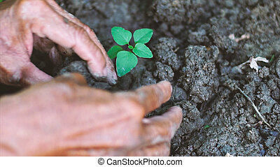 old man planting a little tree in the garden. Ecology concept