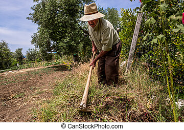 Old man tilling the ground with a hoe - Elderly hispanic man...