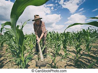 Old man working in corn field