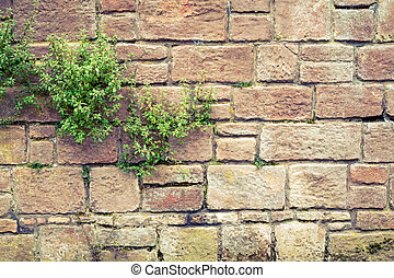 Old medieval wall covered with plants