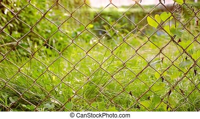 Old metal fence and blurred green grass with flying butterfly. shift motion