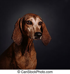old mixed breed dog portrait in the studio