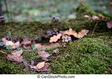 Old moss-covered log in the autumn forest as background
