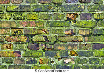 Old mossy wall in the jungle
