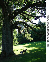 Old oak and bench in english park