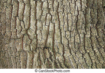 Old oak bark - Rough cracked textured old oak bark...