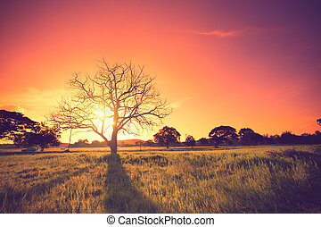 Old oak in sunset with sun vintage color