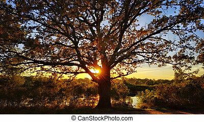 Old oak on a sunset. Beautiful fall scene