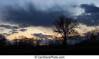 old oak tree at dusk
