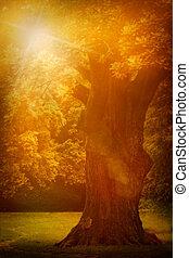 Old oak tree - Old oak in summer sunset