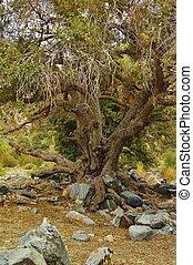 Old oak tree textured landscape