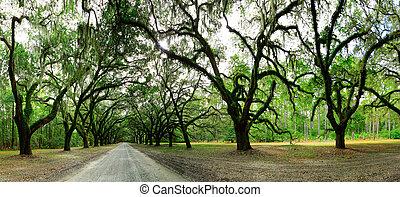 Old oak trees covered in moss. Forsyth Park, Savannah, Georgia