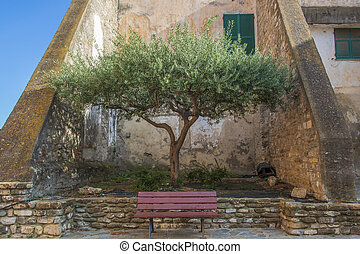 Old olive tree and bench in italian town.