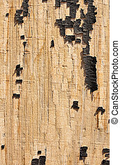 Old painted wood texture.